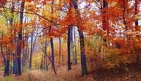 Autumn Woodland Fine Art Print