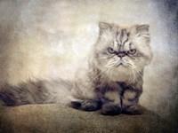 Cranky Cat Fine Art Print