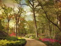 The Azalea Garden Fine Art Print