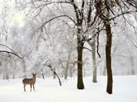 Winter's Breath Fine Art Print