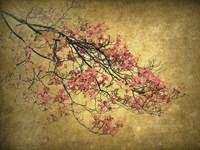 Asian Dogwood Fine Art Print