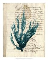 Vintage Teal Seaweed II Fine Art Print