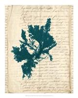 Vintage Teal Seaweed IV Fine Art Print