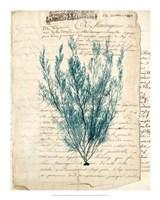Vintage Teal Seaweed VII Fine Art Print