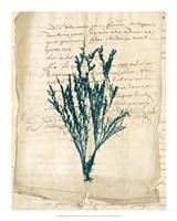 Vintage Teal Seaweed VIII Fine Art Print