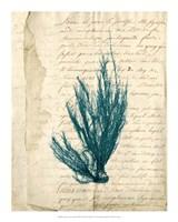 Vintage Teal Seaweed IX Fine Art Print