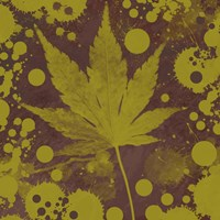 Botany Expressions II Framed Print