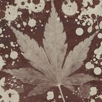 Botany Expressions IV Framed Print