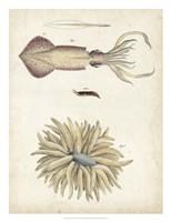 Ocean Curiosities I Fine Art Print