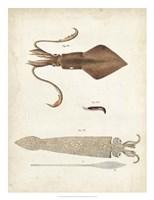 Ocean Curiosities II Fine Art Print