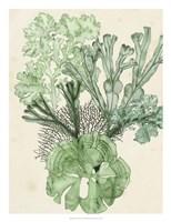 Seaweed Composition I Fine Art Print