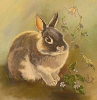Rabbit In Columbine Fine Art Print