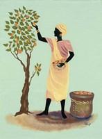 Picking Mangos Fine Art Print