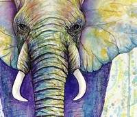 Elephant Face Fine Art Print