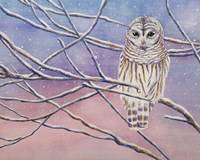 Snowy Barred Owl Fine Art Print