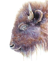 Spirit of the West Buffalo Fine Art Print