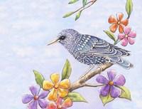 Starling Bird with Flowers Fine Art Print
