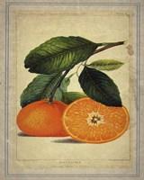 Oranges 1 Fine Art Print