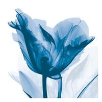 Lusty Blue Tulip Fine Art Print