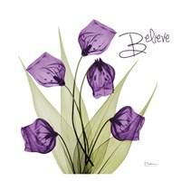 Believe Sandersonia H34 Fine Art Print