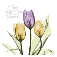 Purple Sunshine Tulips Fine Art Print