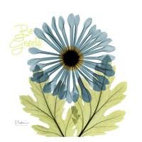 Greatful Chrysanthemum H68 Fine Art Print