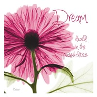 Pink Chrysanthemum Dream Fine Art Print