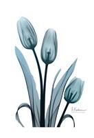 Midnight Sky Tulip Trio Fine Art Print