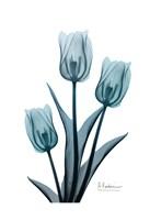 Midnight Sky Tulip Trio 2 Fine Art Print