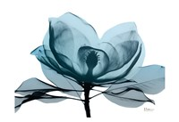Midnight Magnolia 2 Framed Print