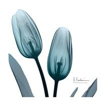 Midnight Sky Duo 1 Fine Art Print