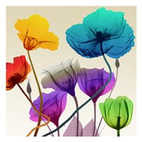 Floral Calm Pop Fine Art Print