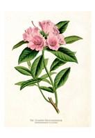 Botanical 1 Fine Art Print