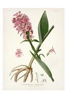 Botanical 2 Fine Art Print