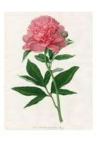 Botanical 3 Fine Art Print
