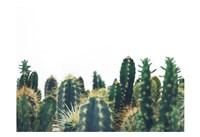 Prickly Field Fine Art Print