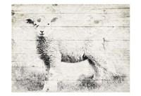 Vintage Lamb Framed Print