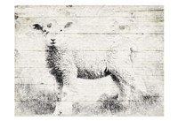 Vintage Lamb Fine Art Print