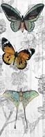 Butterflies Are Free 1 Fine Art Print