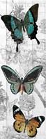 Butterflies Are Free 2 Fine Art Print