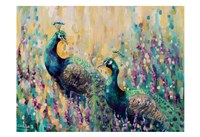 Peacocks In The Field 1 Fine Art Print