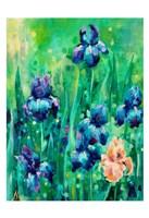 Irises 1 Fine Art Print