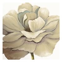 Cream Silken Bloom Fine Art Print