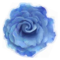 Blue Rose Fine Art Print