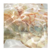 Shell Abstract 1 Fine Art Print