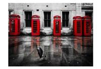 London Phone Booths Bird Fine Art Print