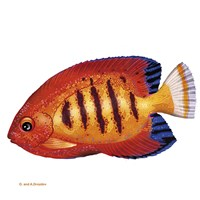 Fish 2 Red-Yellow Fine Art Print