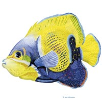 Fish 3 Blue-Yellow Fine Art Print