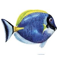 Fish 4 Blue-Yellow Fine Art Print