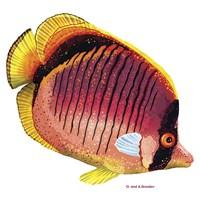 New Fish 1 Fine Art Print